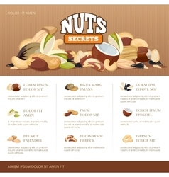Natural raw nuts mix brochure design template vector image