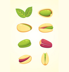 Set pistachio nut in cartoon vector