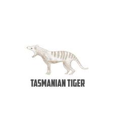 vintage retro australian tasmanian tiger logo desi vector image