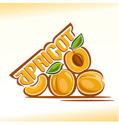 apricot still life vector image vector image