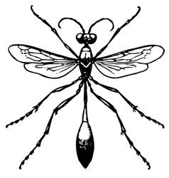 Ammophila vector