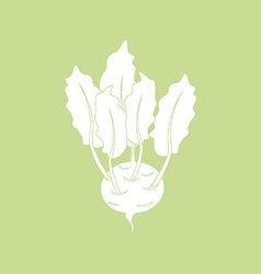 Kohlrabi Vegetable Icon vector image