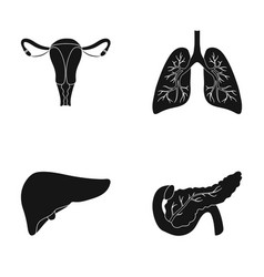 Uterus lungs liver pancreas organs set vector