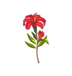 Tiger Lily Hand Drawn Realistic vector image vector image