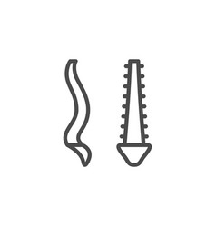 backbone anatomy line outline icon vector image