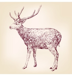 Deer hand drawn llustration realistic sketch vector