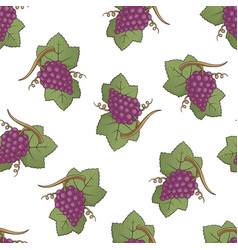 red grapes pattern vector image