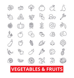 Vegetables mixed fruits garden food fresh vector