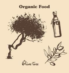 hand drawn vintage olive set vector image