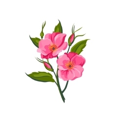 Dog rose hand drawn realistic vector