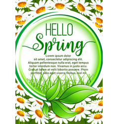hello spring floral frame poster with daisy flower vector image vector image