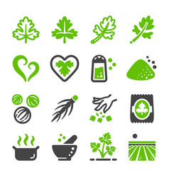 Coriander icon vector