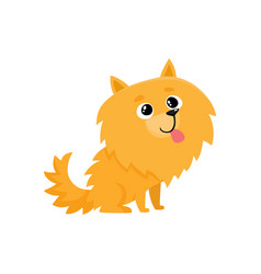 Cute little long haired pomeranian spitz dog vector