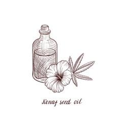 Drawing kenaf seed oil vector