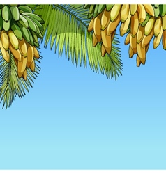Palm leaves and bunches of bananas vector