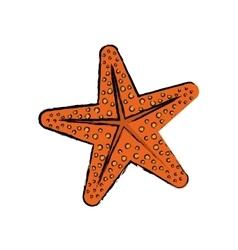 Star sea creature vector image