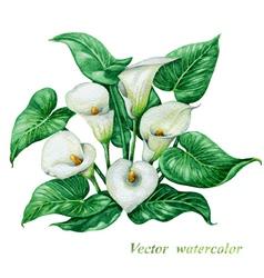 Calla watercolor vector image