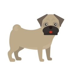 Pug dog standing animal canine purebred puppy vector