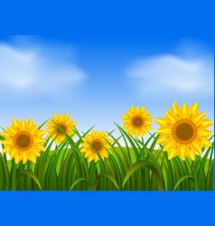 Background scene with sunflowers in garden vector