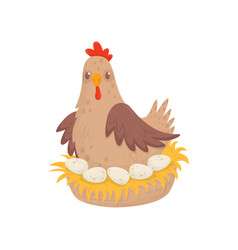 chicken sitting in nest with eggs domestic fowl vector image