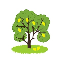 Lemon Tree Icon vector