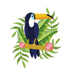 tropical tucano cartoon vector image