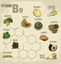 vitamin b9 food vector image