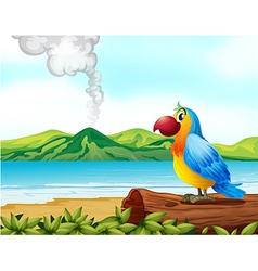 A colorful parrot at the beach vector image vector image