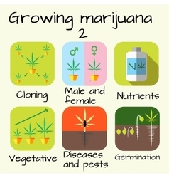 Marijuana growing set vector image