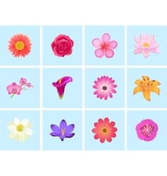 Flower Color Set Design Flat Isolated vector image