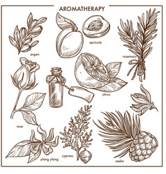 Aromatherapy natural ingredients monochrome vector