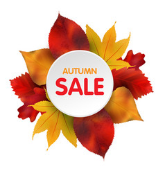 Autumn sales banner with colorful leaves vector