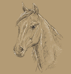 horse portrait-3 on brown background vector image