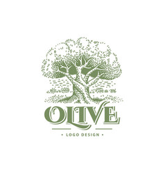 olive label emblem design tree illustration vector image