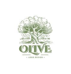 olive label emblem design tree vector image