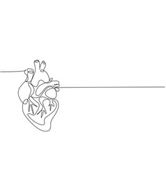one continuous line drawing anatomical human vector image