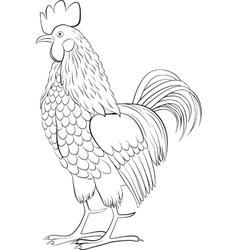 Rooster black line art sketch of cock vector