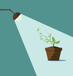 Young sprout and lamp with ray of light vector image