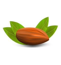 eco almond icon realistic style vector image