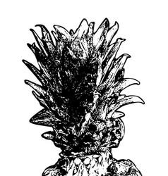 Grunge detailed pineapple vector