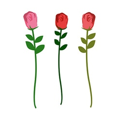 Set of three roses of different colors on a white vector image