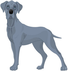 great danes dog vector image