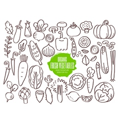 Set of hand drawn vegetables doodles vector image vector image