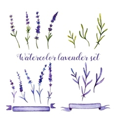 Set of watercolor lavender and ribbons vector