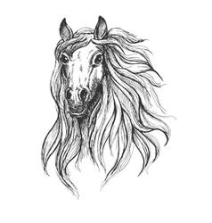 Sketch of wild young mare head vector image