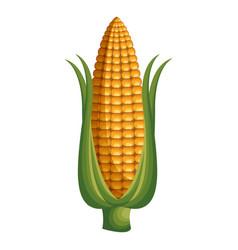 corn vegetable healthy food vector image