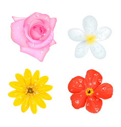 Four flowers with drops set vector