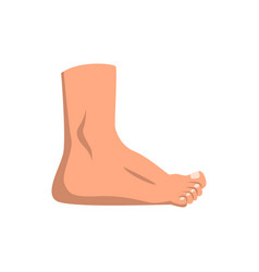 Human foot standing on a white vector