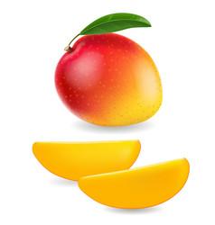Realistic ripe mango with mango slice vector
