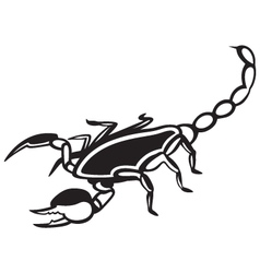 Scorpion Pandinus imperator vector
